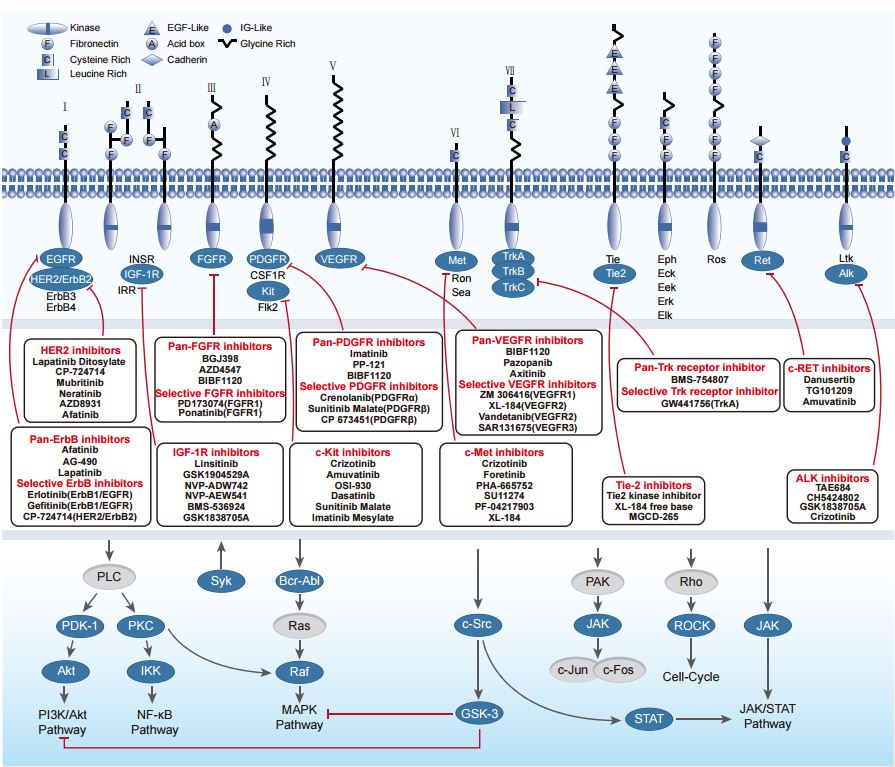 Some of the Intracellular Pathways relevant in Cancer ...