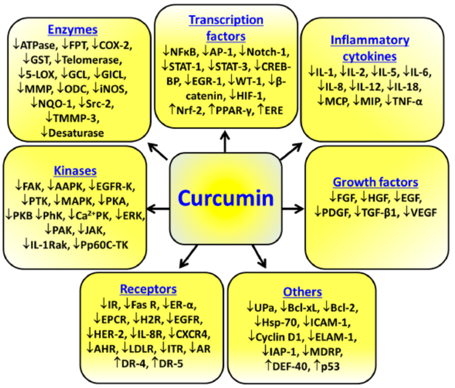 Curcumin mechanisms