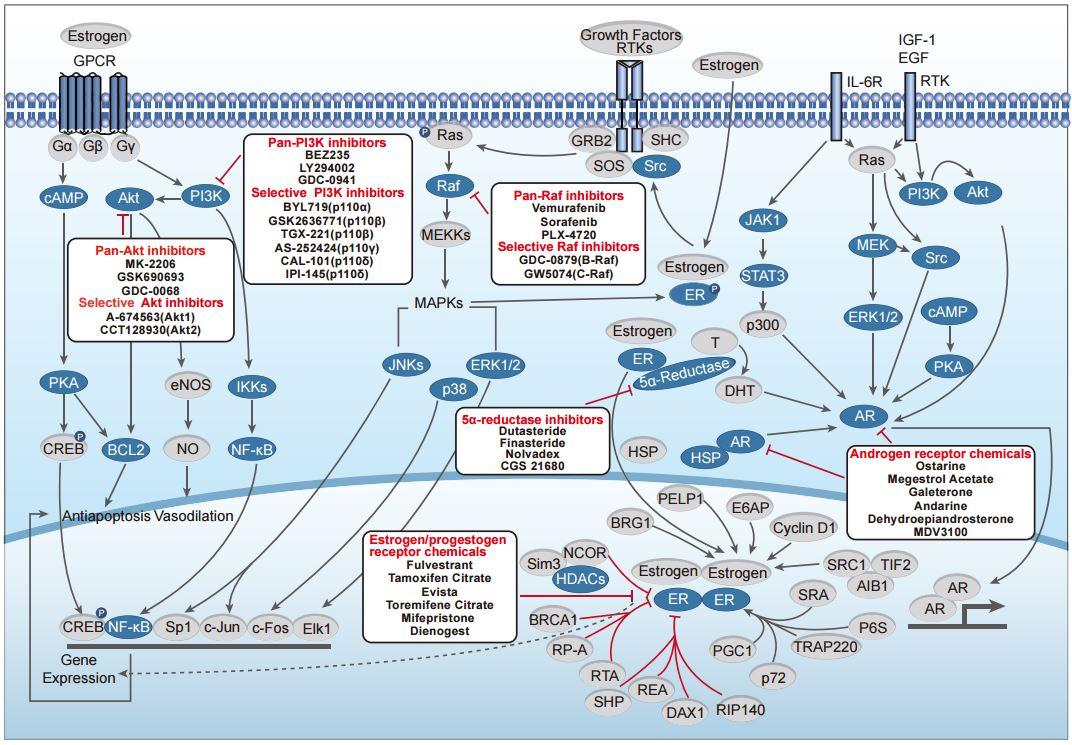 Endocrinology & Hormones