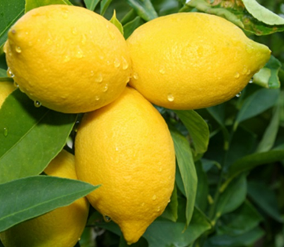 Citric Acid Inhibits Fermentation - Blog: Cancer Treatments - from