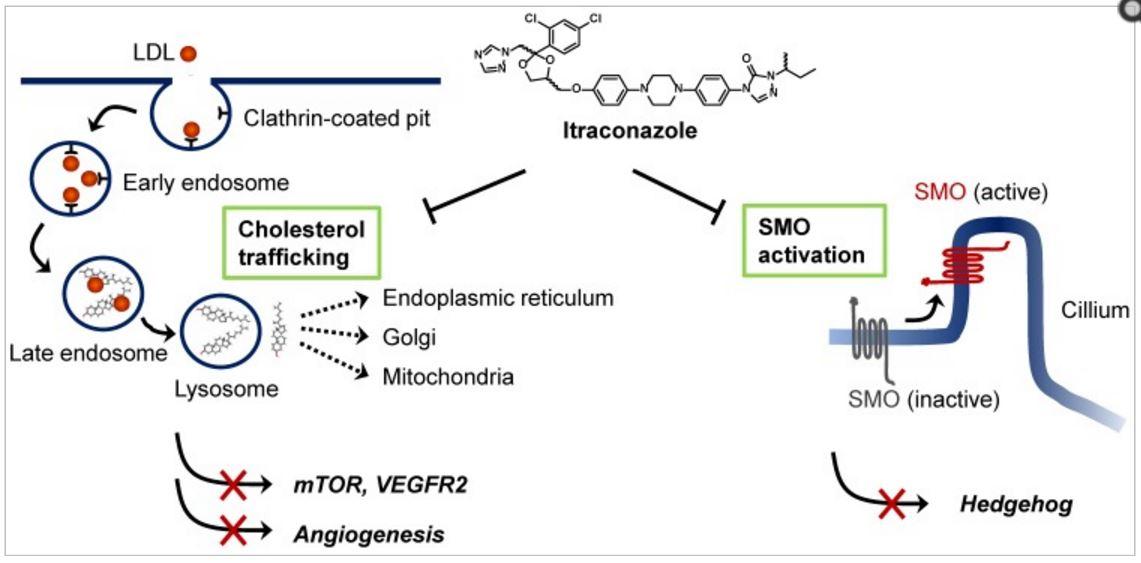 Itraconazole mechanisms