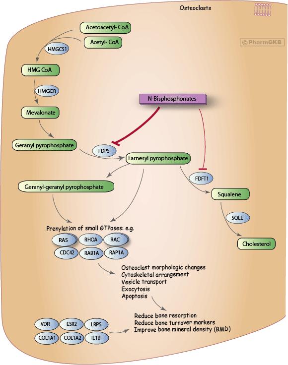 mevalonate-pathway-2